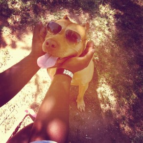 Celebrity dogs wear shades, too