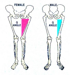 Pelvis and femur differences in anatomy between women and men.